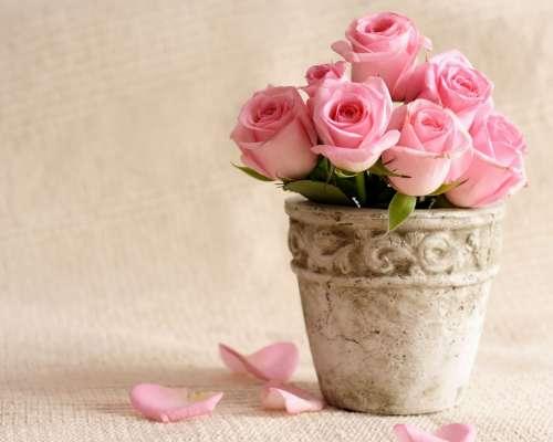 картинки на рабочий стол розы № 521344 загрузить