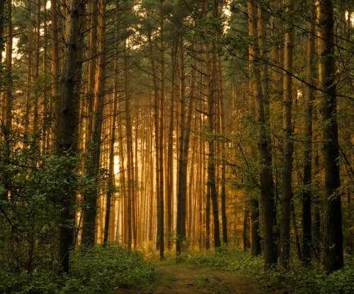 обои на рабочий стол лес природа № 517803 бесплатно
